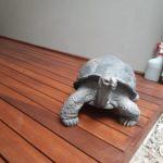 Jual Deck Kayu – Griya Kayu Surabaya – 21